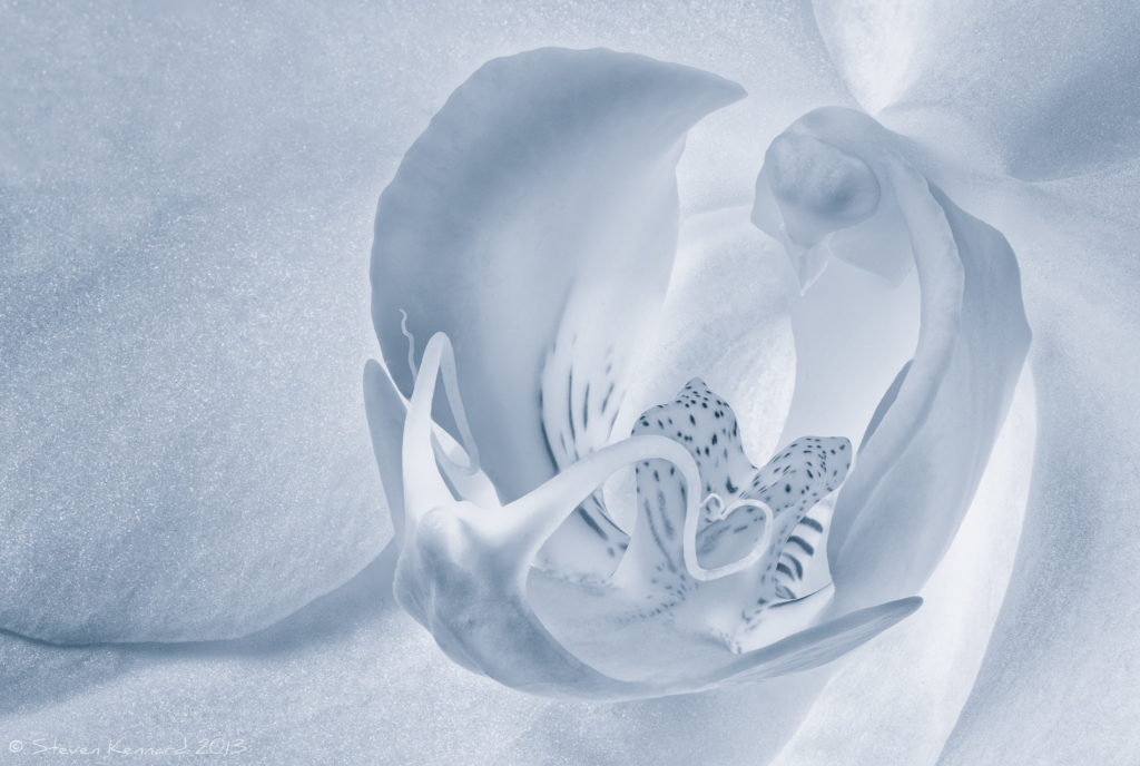 Orchid - macro focus stacked - Steven Kennard 2013