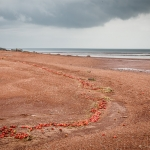 Strawberry Beach forever - Steven Kennard 2012