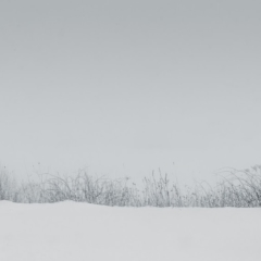 Grasses through the snow - Steven Kennard 2013