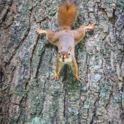 Yoga on a tree – Steven Kennard 2012