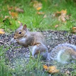 Another squirrel – Steven Kennard 2012