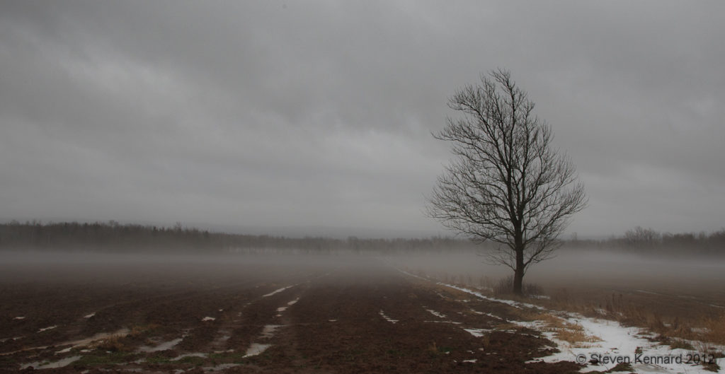 Foggy field, Woodville, Nova Scotia - Steven Kennard 2012