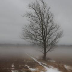 Tree in field, Woodville, Nova Scotia - Steven Kennard 2012