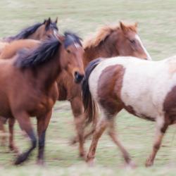 Wild Horses 1 - Steven Kennard 2012