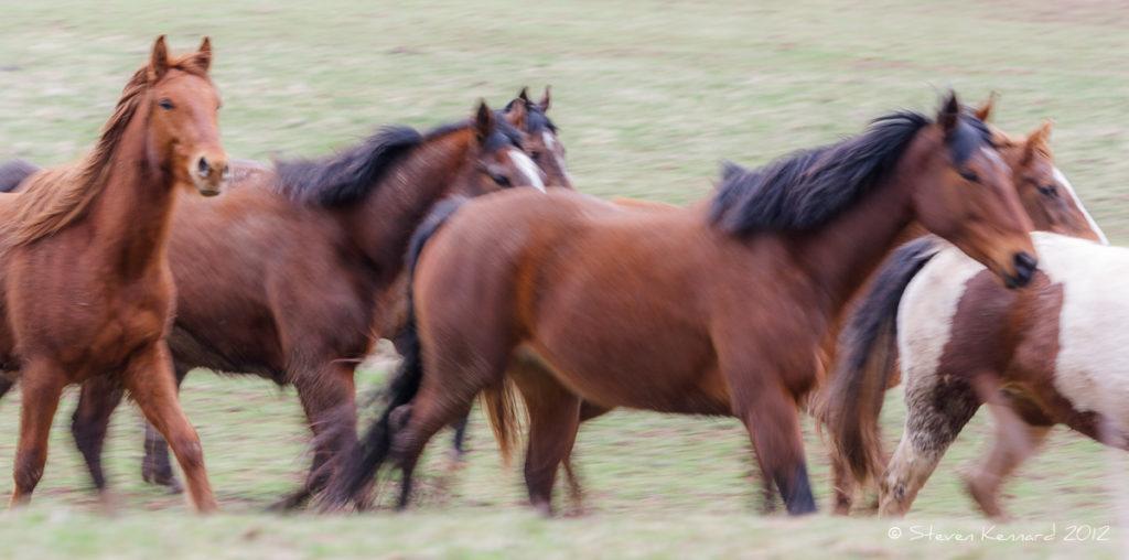 Wild Horses 2 - Steven Kennard 2012