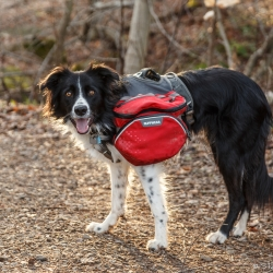 Joni ready to hit the trail – Steven Kennard 2015
