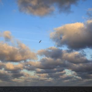 North Sea Gull - Steven Kennard 2017