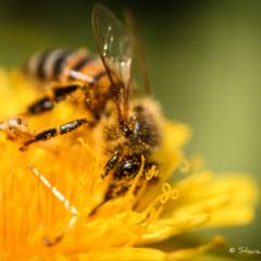 Pollen Face - Steven Kennard 2012