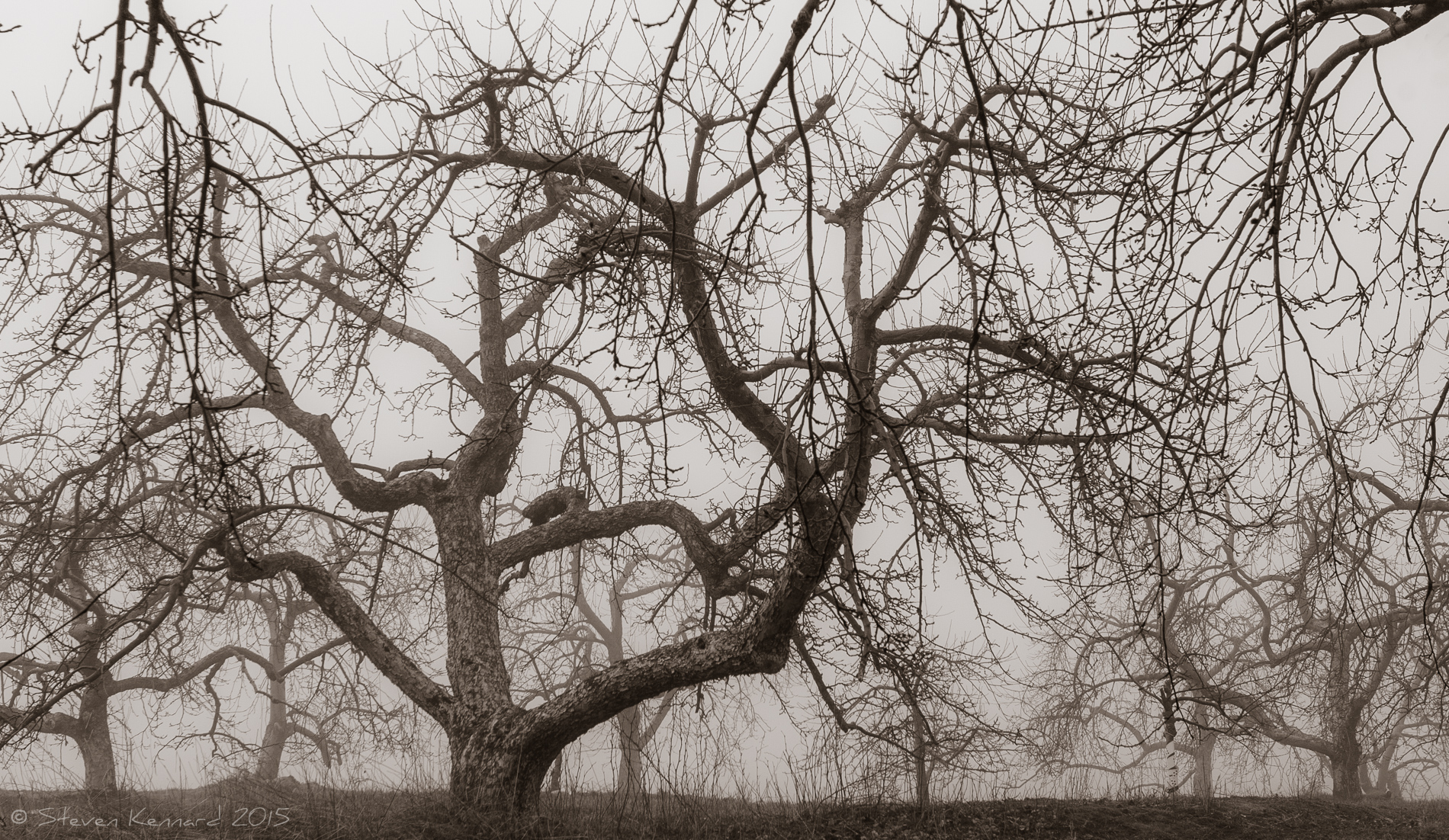 The Lost Orchard 2 Steven Kennard