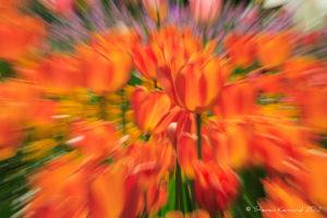 Spring Extravaganza - Steven Kennard 2012