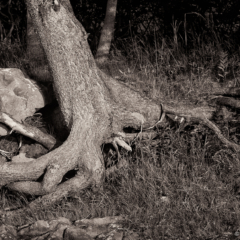 Tangled Roots - Steven Kennard 2013